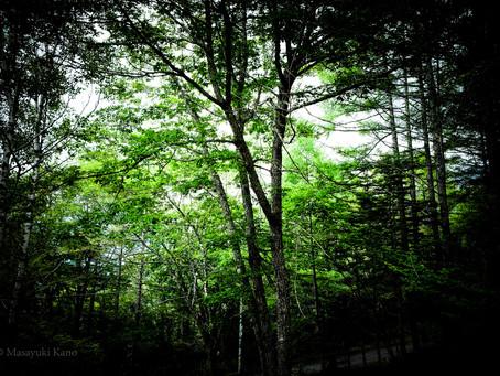 瞑想的な夏です。蓼科高原標高1700メートル。