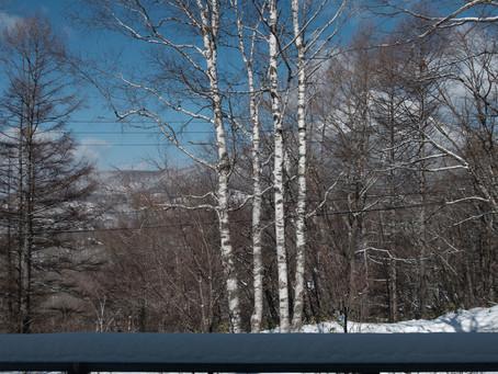 厳冬期だけど陽射しが強くなってきた