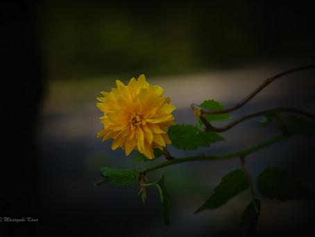 蓼科高原日記/カラー写真メインです。