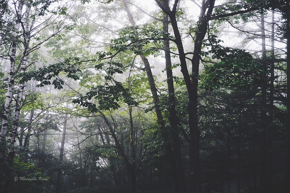 山の天気は変わりやすい。蓼科高原も例外ではありません。雨具をお忘れ無く。