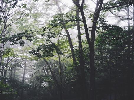 蓼科高原日記/湿度が低い蓼科高原