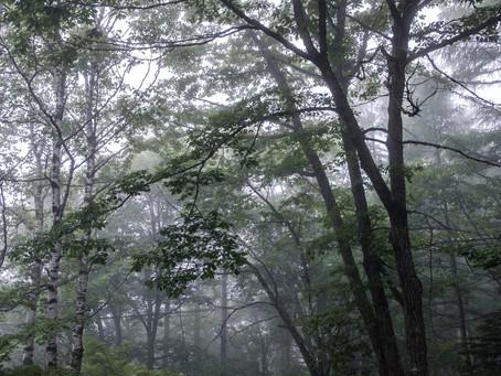 新緑の蓼科高原も雨でした