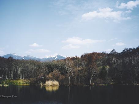 蓼科高原日記/GWの高原は桜の季節です