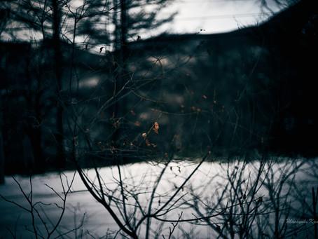 蓼科高原日記/枯れ葉は冬の花