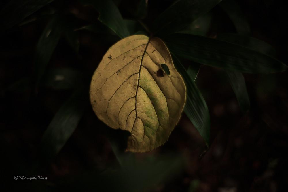 この秋初めて向き合う落ち葉|蓼科高原ペンション・サンセット