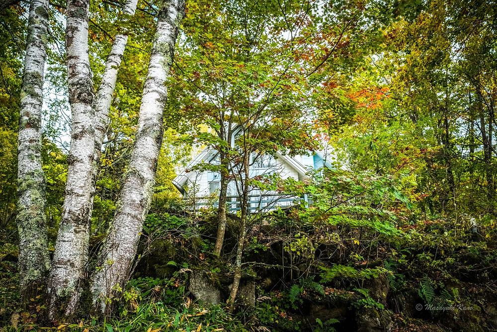 色づく蓼科高原・標高1700メートルの森
