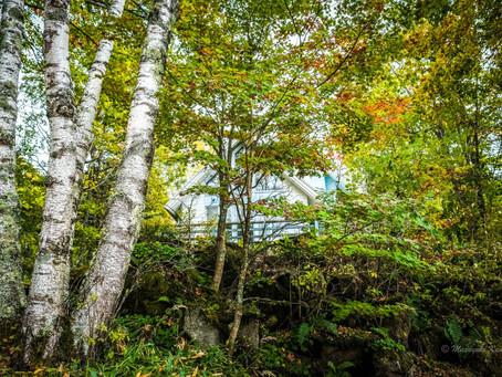 台風一過 紅葉真っ盛りの蓼科高原