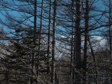 ラウンジの窓から北横岳山頂を望む