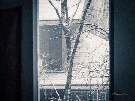 春の雪に驚きました