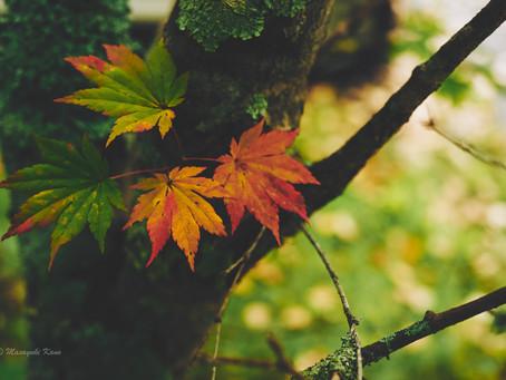 蓼科高原日記/麦草峠・白駒池が紅葉見頃