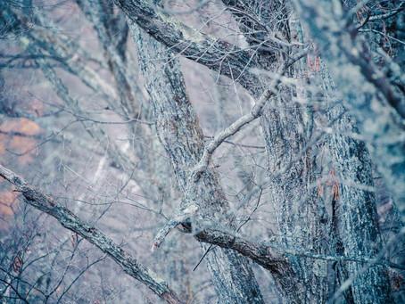 25年の歳月を共に生きた樹木