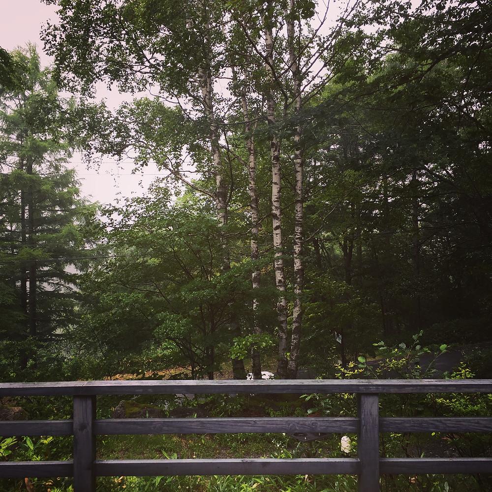 蓼科高原のにわか雨(驟雨)はルーティンです