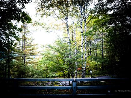 日ごとに色づく森 蓼科高原