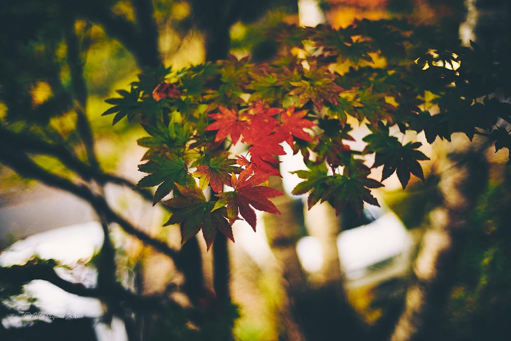 蓼科高原ペンション・サンセットの庭の紅葉も見ごろです