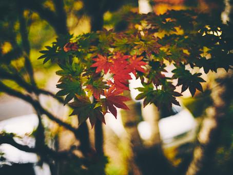 蓼科高原日記/秋の音は優しく