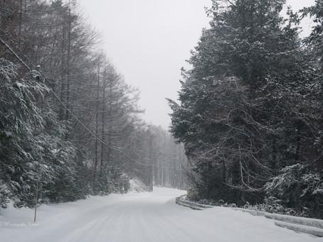 ここ数日毎日雪です