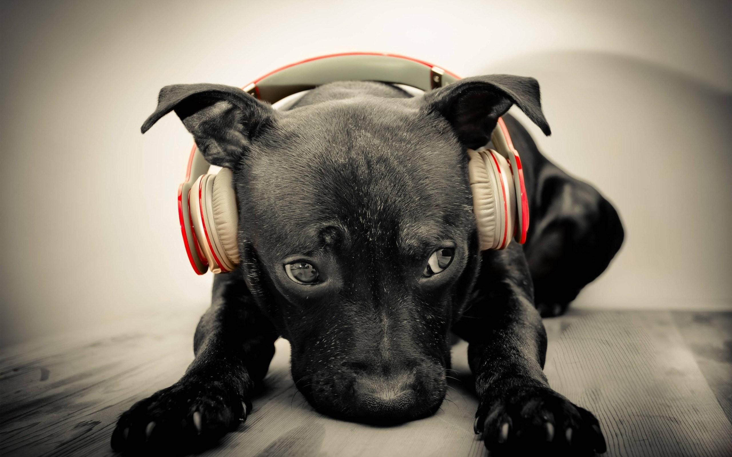 Sfondo-HD-cane-nero-simpatico