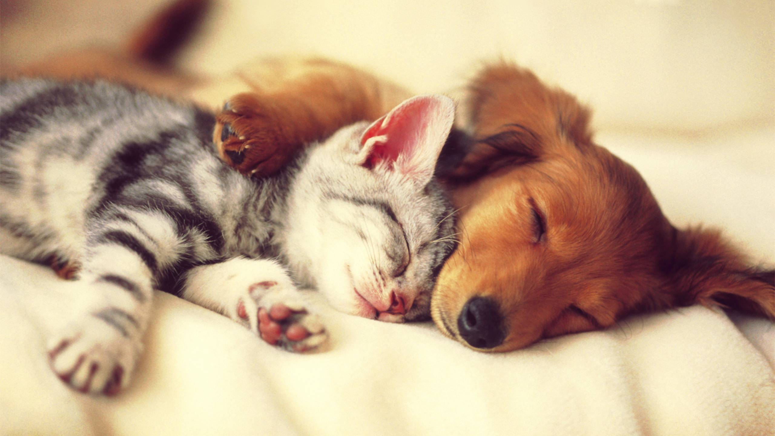 Cute-Cats-and-Dogs-20-HD-Screensavers