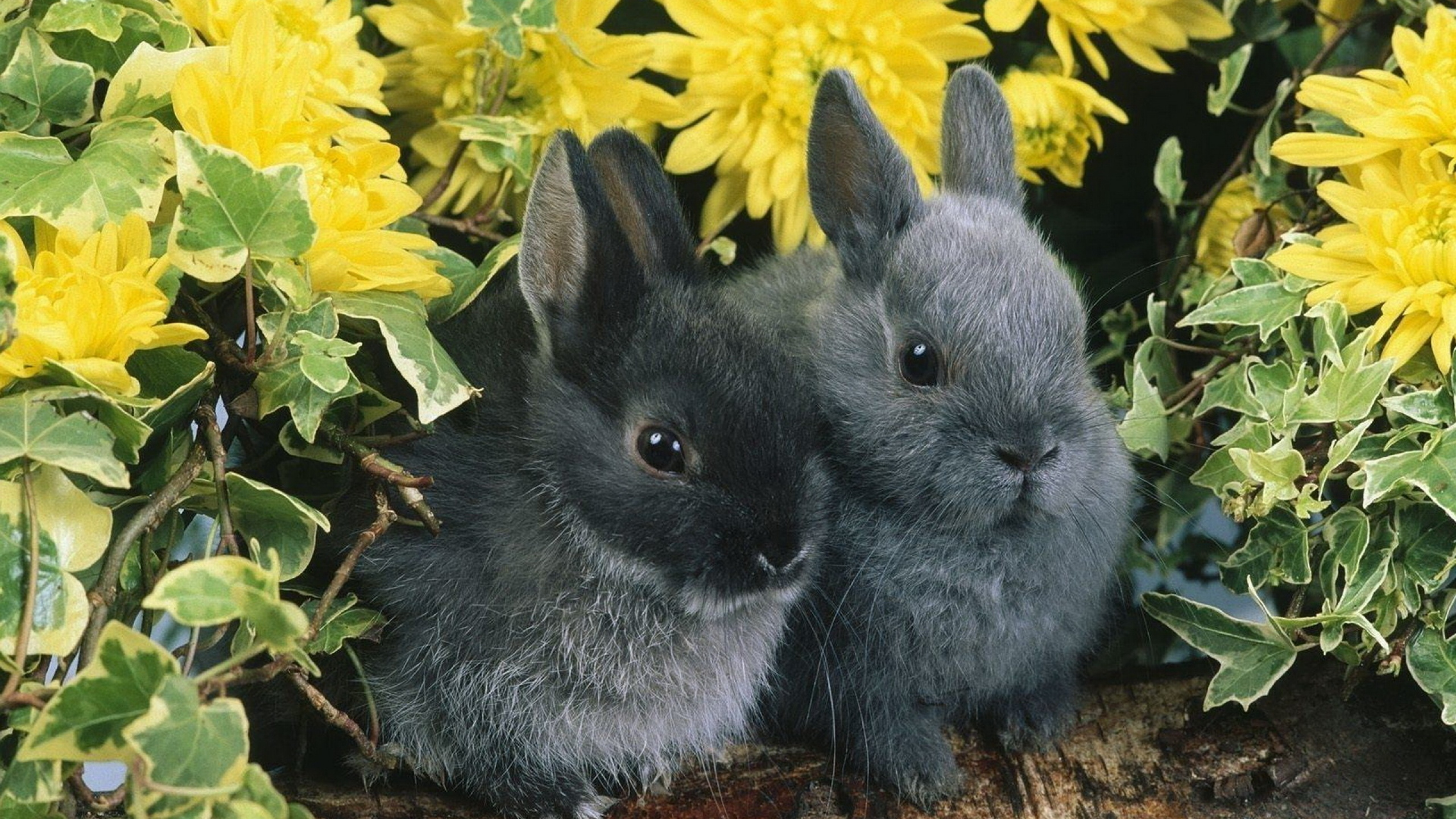 rabbits-couple-grass-hide-2560x1440