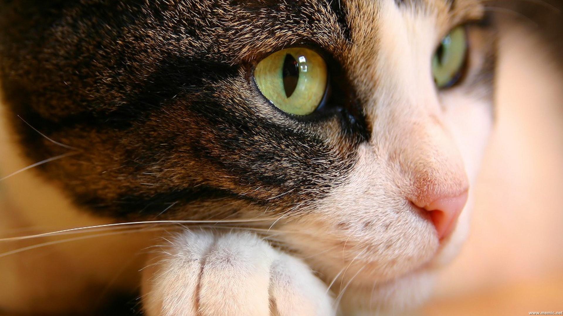 curious_cat_1920x1080