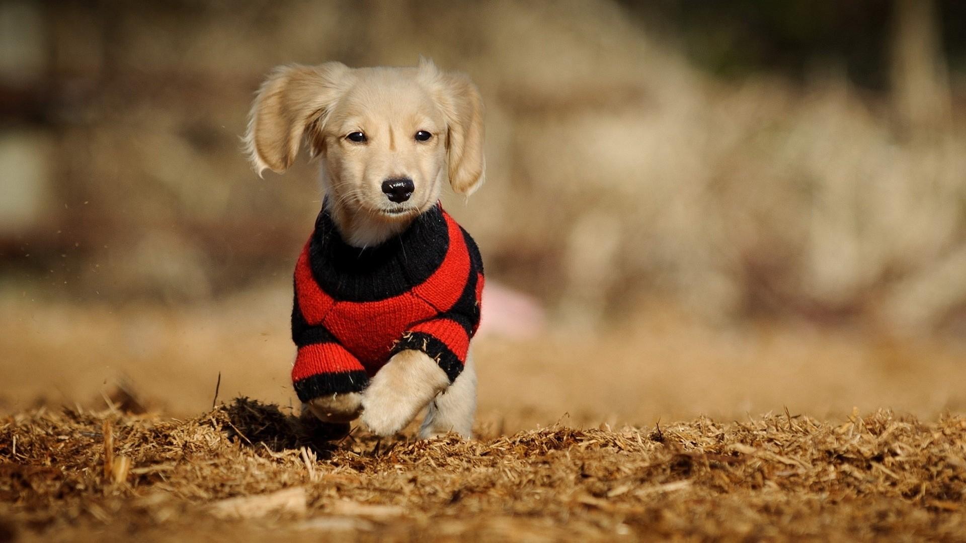 vestito_cucciolo_cane