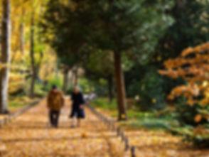 older couple walking.jpg
