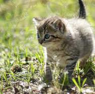 Kitten Walking 4