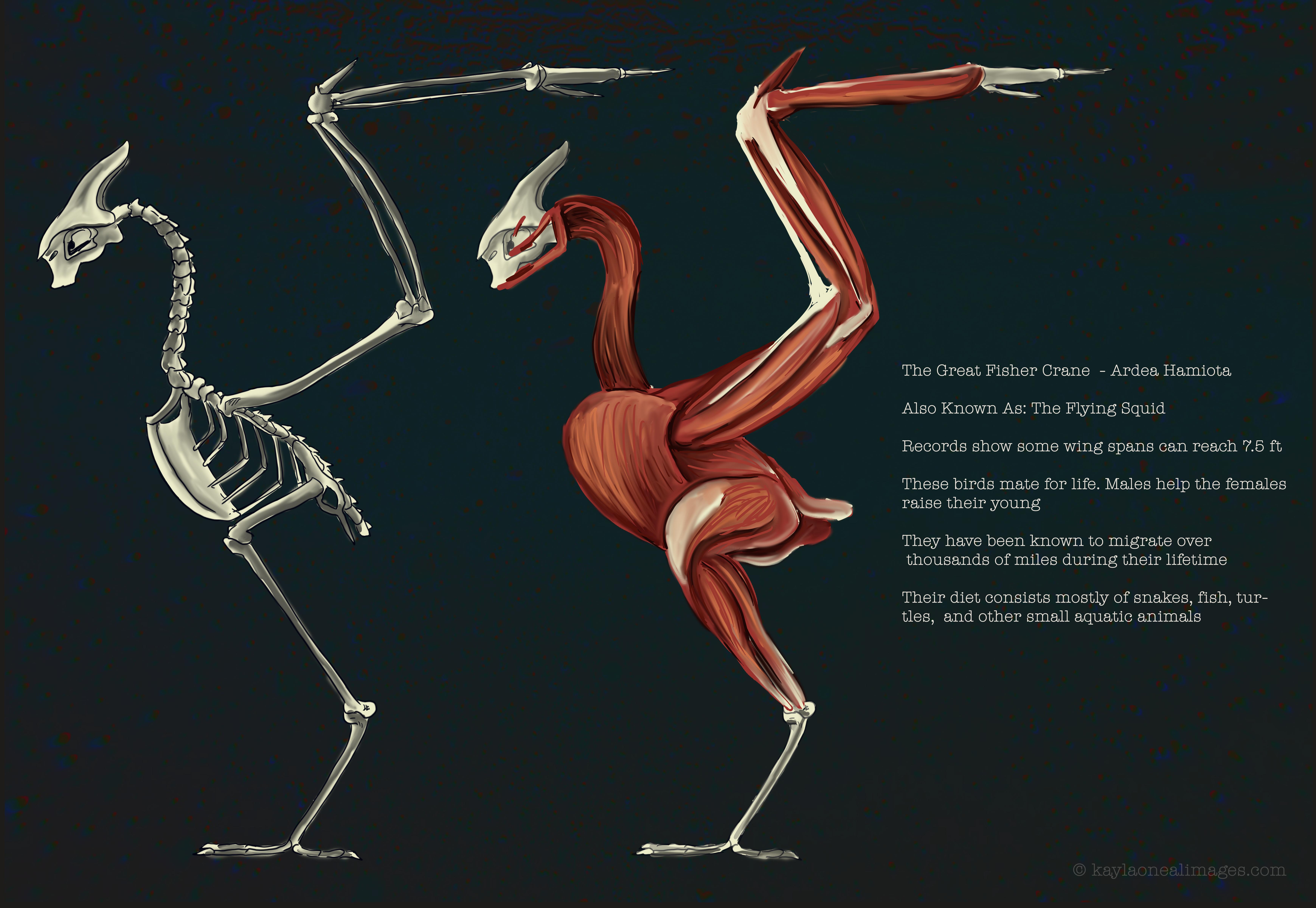 Great Fisher Crane Study