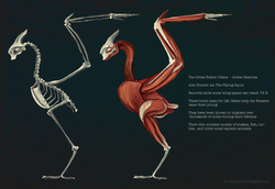 Great Fisher Crane Study