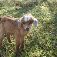 New Born Kid Standing