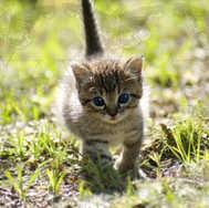 Kitten Walking 1