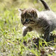 Kitten Walking 7