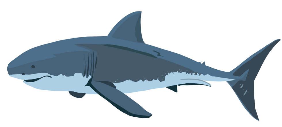 Great White Shark Vector Art