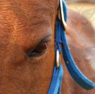 Close Up Sorrel 2