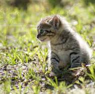 Kitten Sitting 1