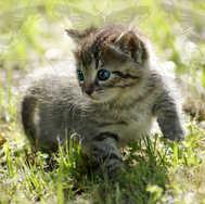 Kitten Walking 5