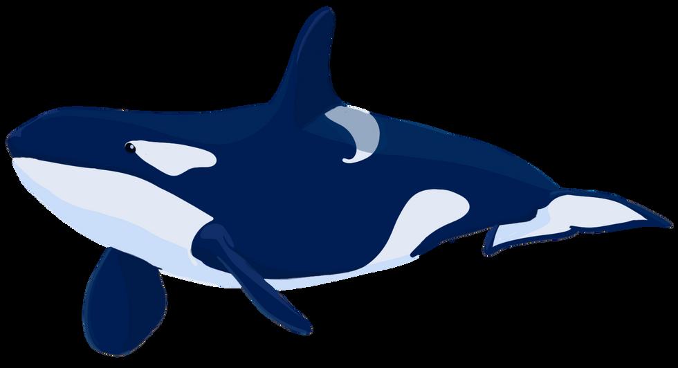 Killer Whale Vector Art