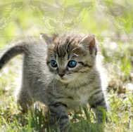 Kitten Walking 6