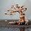 Thumbnail: Dragon Wood Tree - 12 inch -2