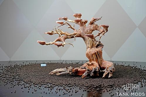 Dragon Wood Tree - 12 inch -2