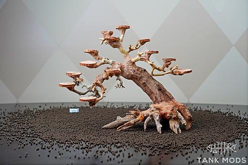 Dragon Wood Tree - 12 inch -3