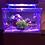 Thumbnail: Saltwater Mini Complete Tank