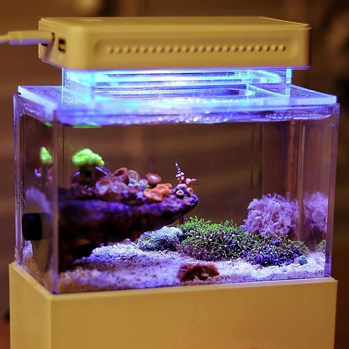 Saltwater Mini Complete Tank