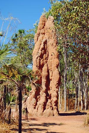 termite_mound1.jpg