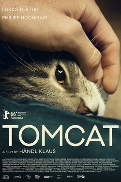 13. Tomcat - B