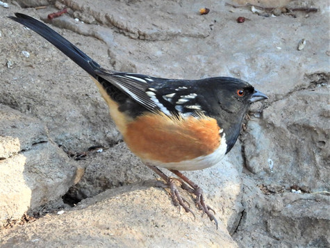 Palo Duro Canyon Bird Blind