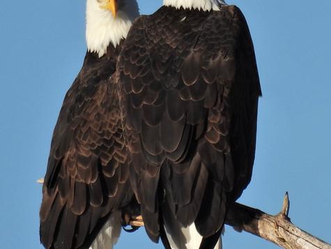 Christmas Bird Count 2020--Amarillo