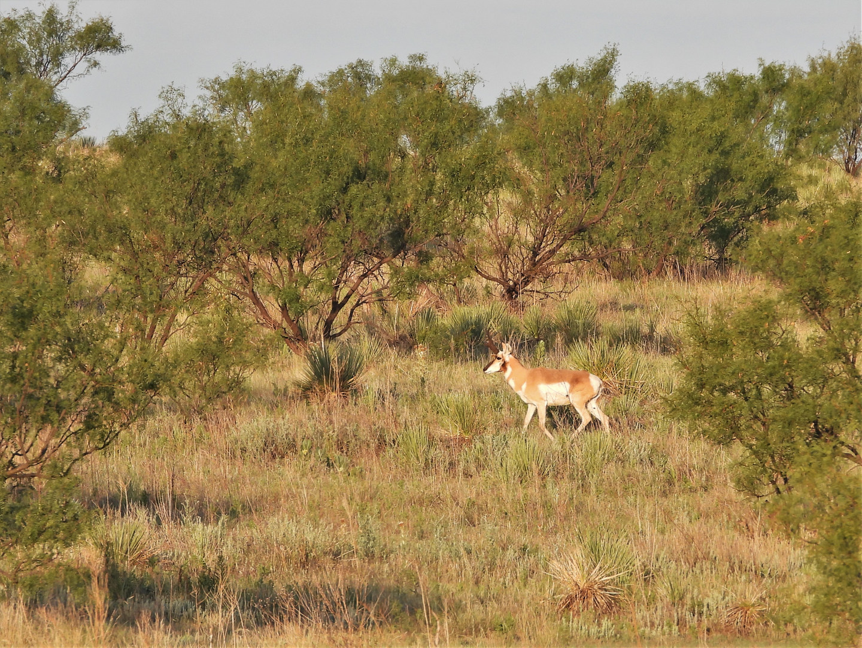 Antelope Plum Creek 8-2-20.jpg