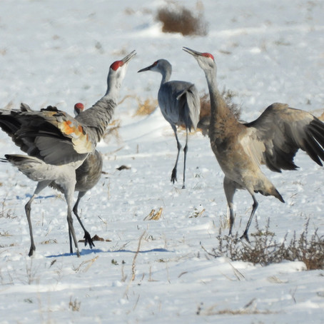 Birding Hot Spots in the Texas Panhandle