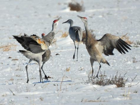 Birding Hot Spots in the Texas Panhandle